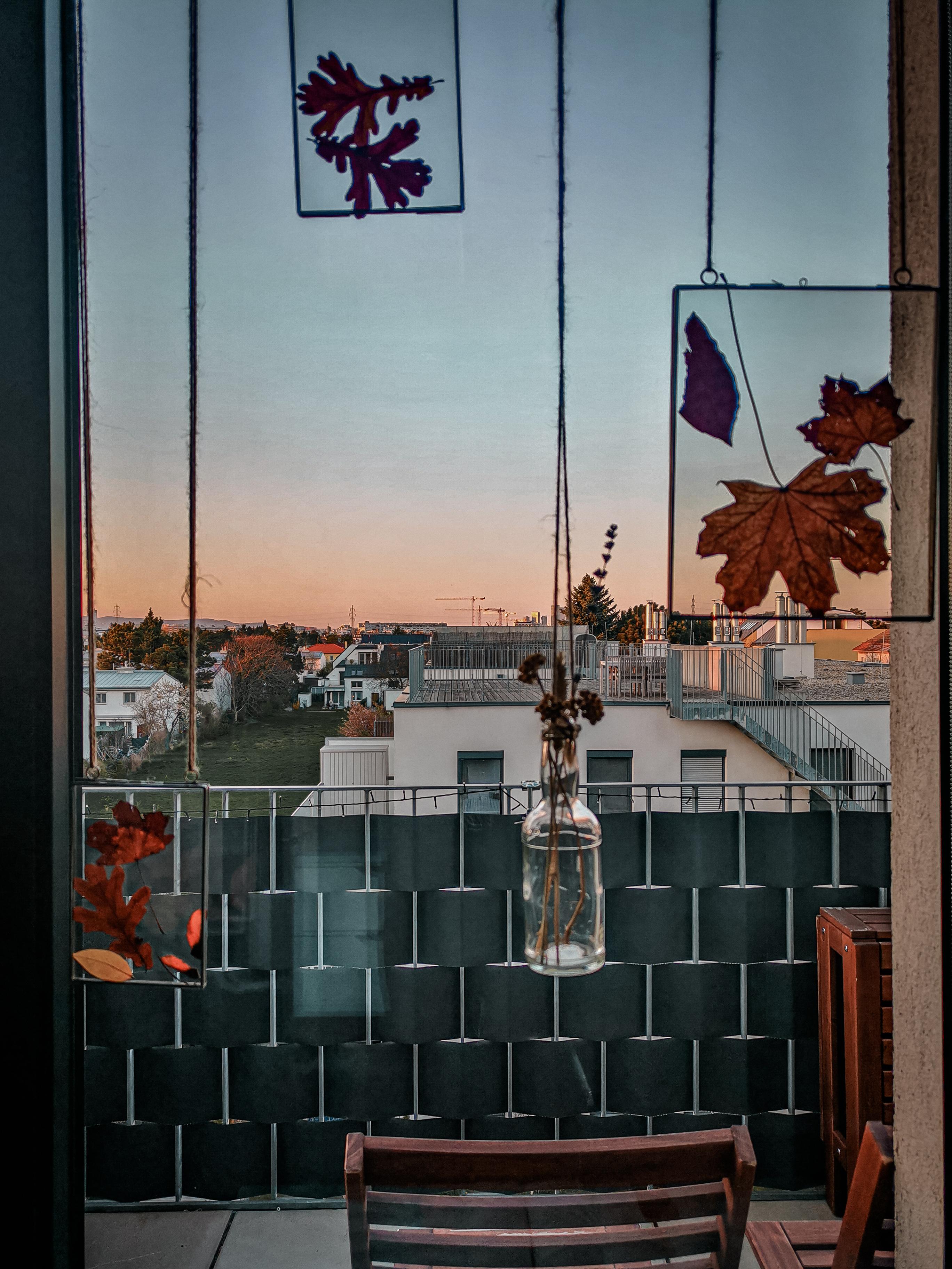IMG 20200407 191506 2 - Botanische Fensterdekoration: Herbarium statt Gardinen