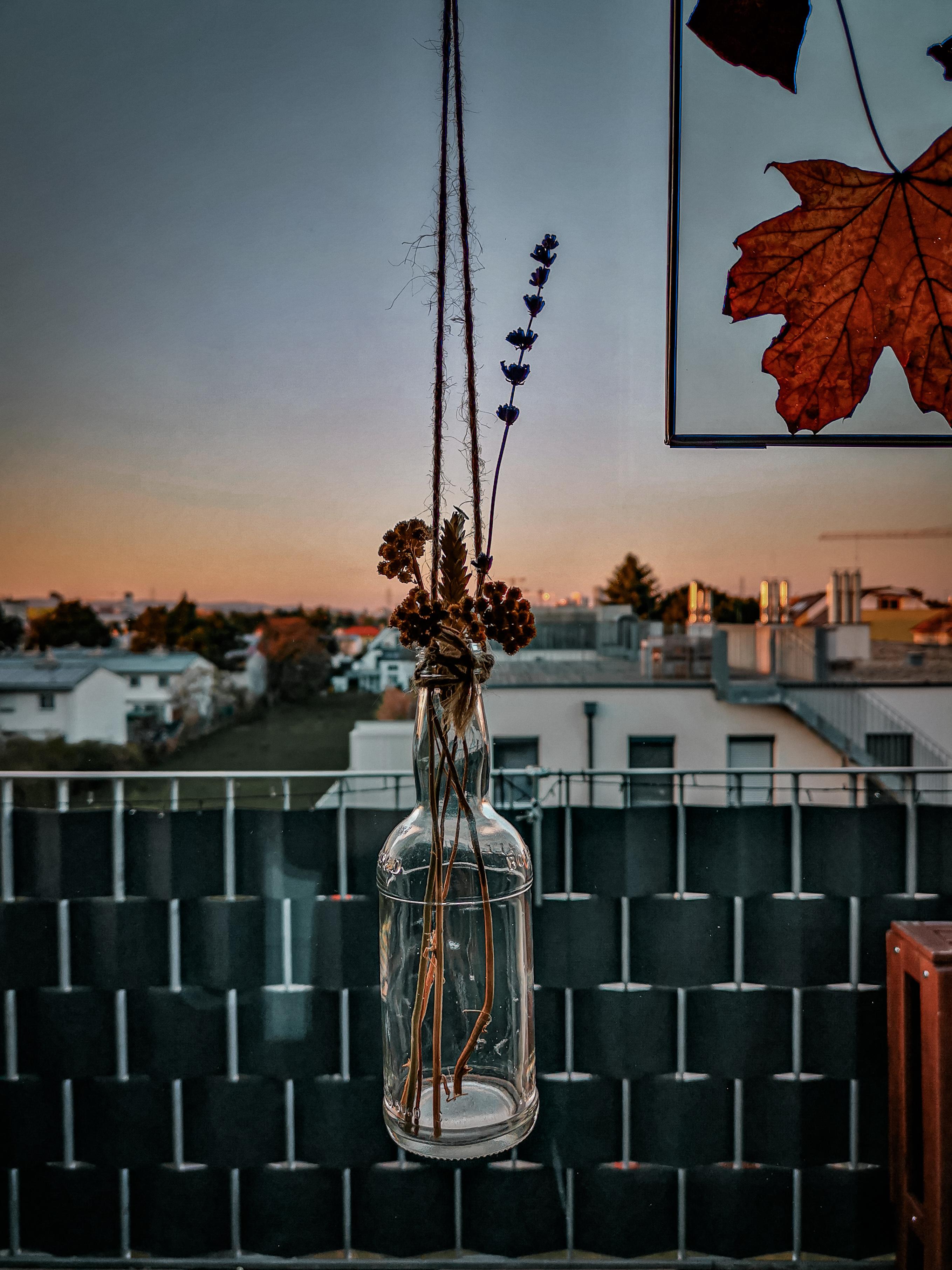 IMG 20200407 191532 2 - Botanische Fensterdekoration: Herbarium statt Gardinen