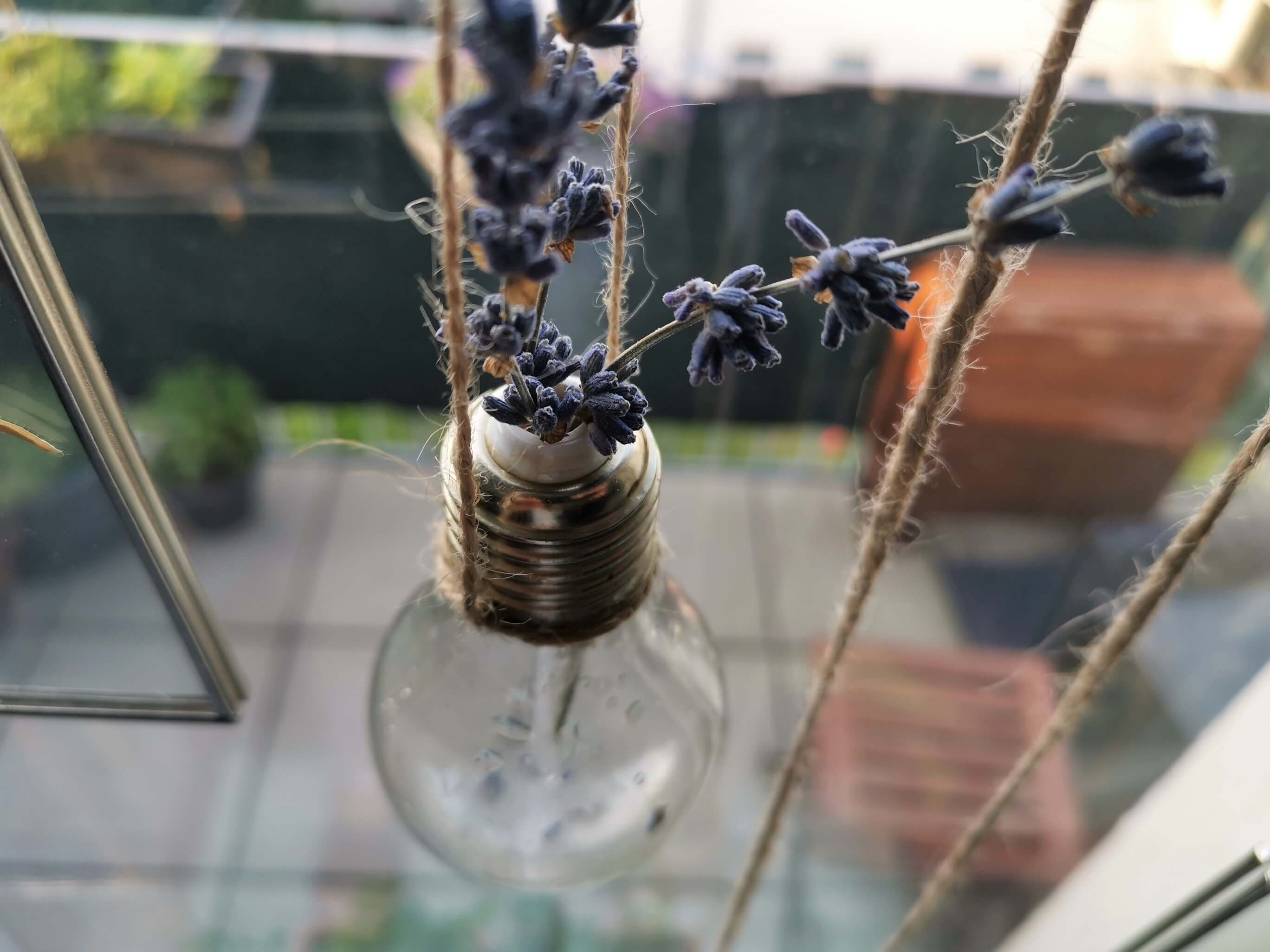 IMG 20190501 185622 resized 20190501 070443406 - Botanische Fensterdekoration: Herbarium statt Gardinen