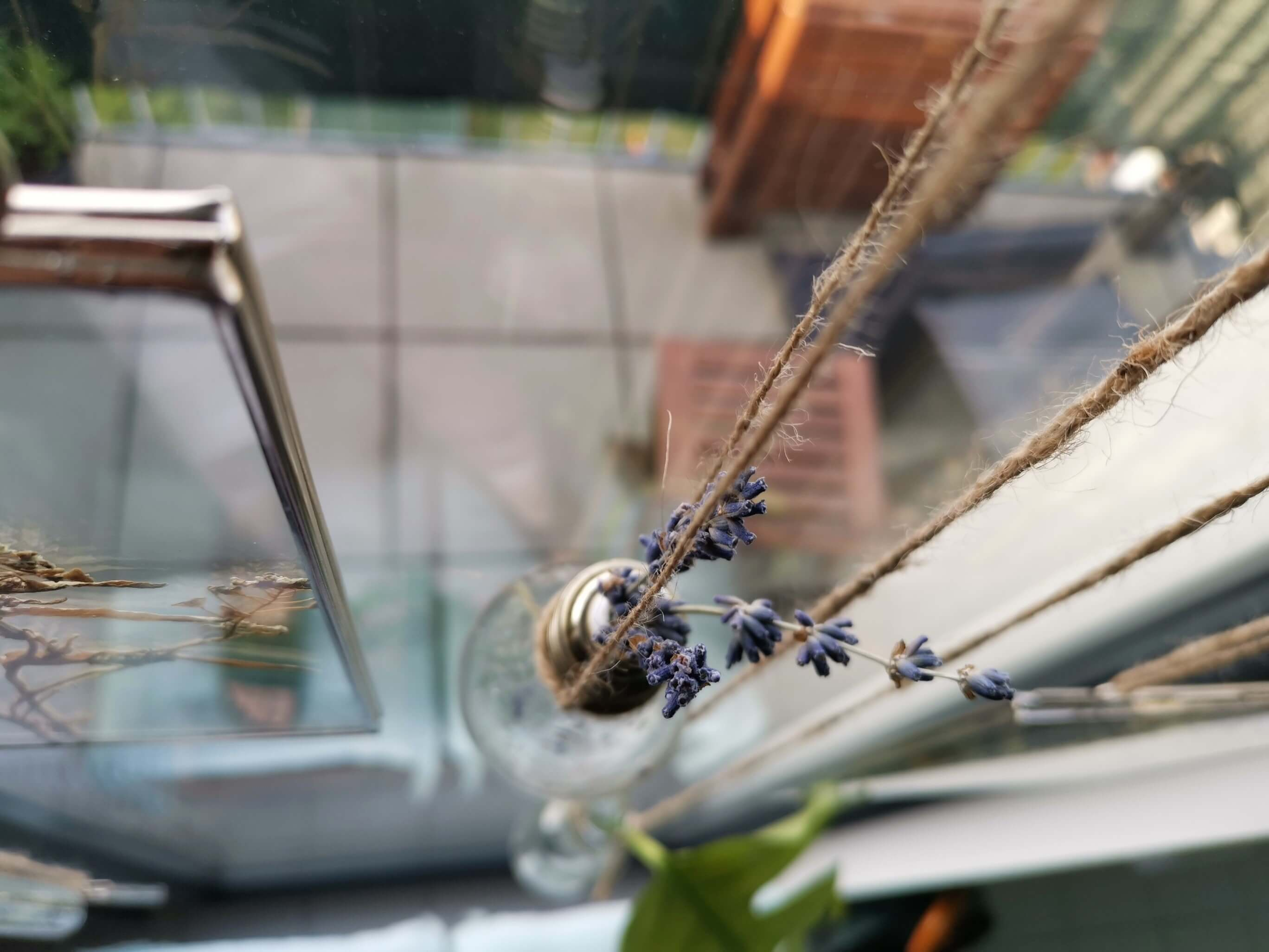 IMG 20190501 185656 resized 20190501 070441454 - Botanische Fensterdekoration: Herbarium statt Gardinen