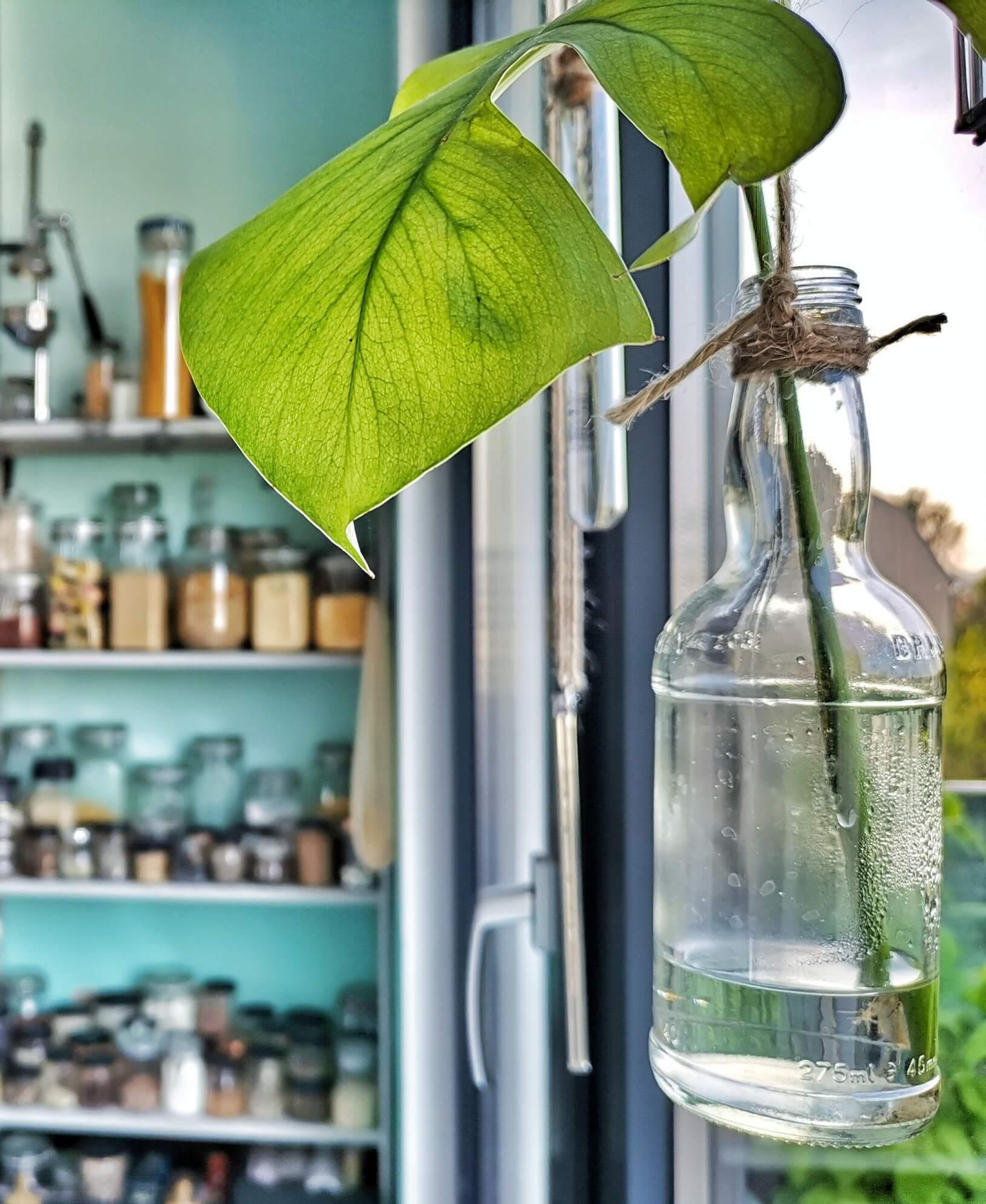 IMG 20190507 064516 577 resized 20190509 080423312 - Botanische Fensterdekoration: Herbarium statt Gardinen