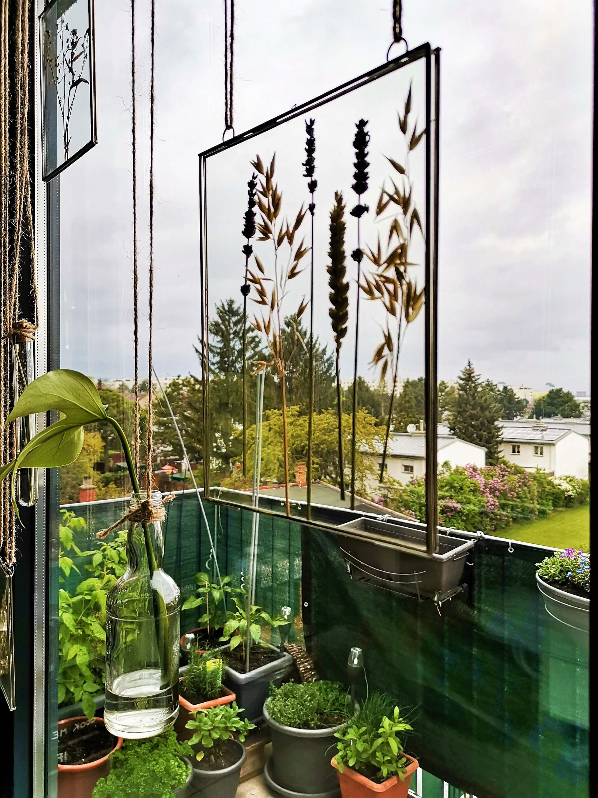 IMG 20190423 192009 01 resized 20190423 080441815 - Botanische Fensterdekoration: Herbarium statt Gardinen