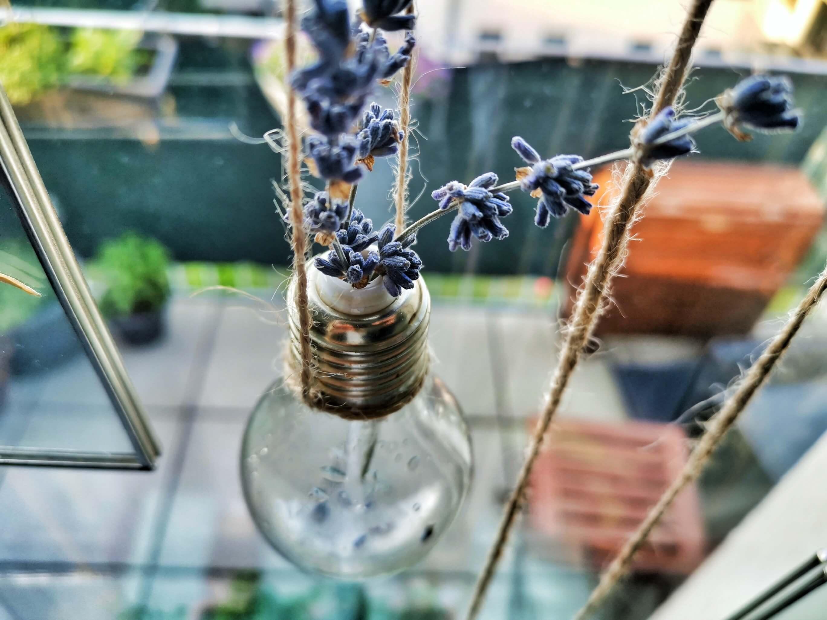 IMG 20190501 185622 01 resized 20190513 100713009 1 - Botanische Fensterdekoration: Herbarium statt Gardinen
