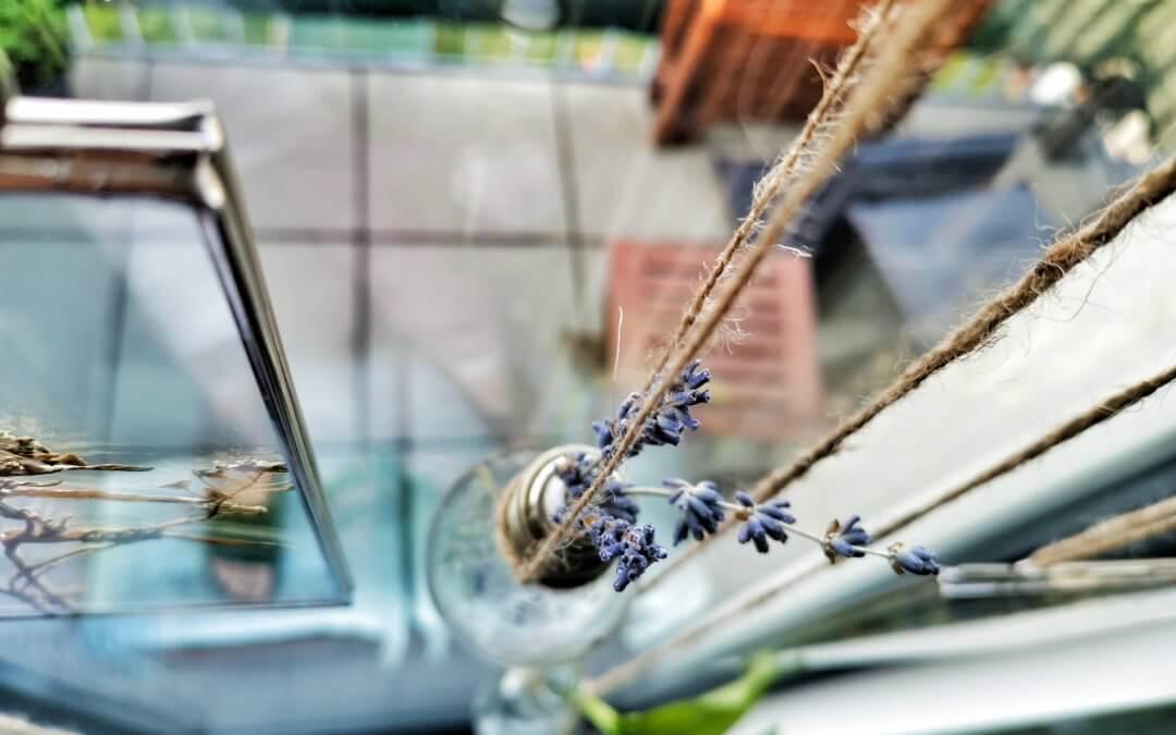 Botanický windowstyling: Vymeňte záclony za okenný herbár