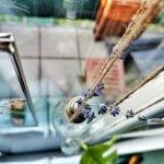 Botanische Fensterdekoration: Herbarium statt Gardinen