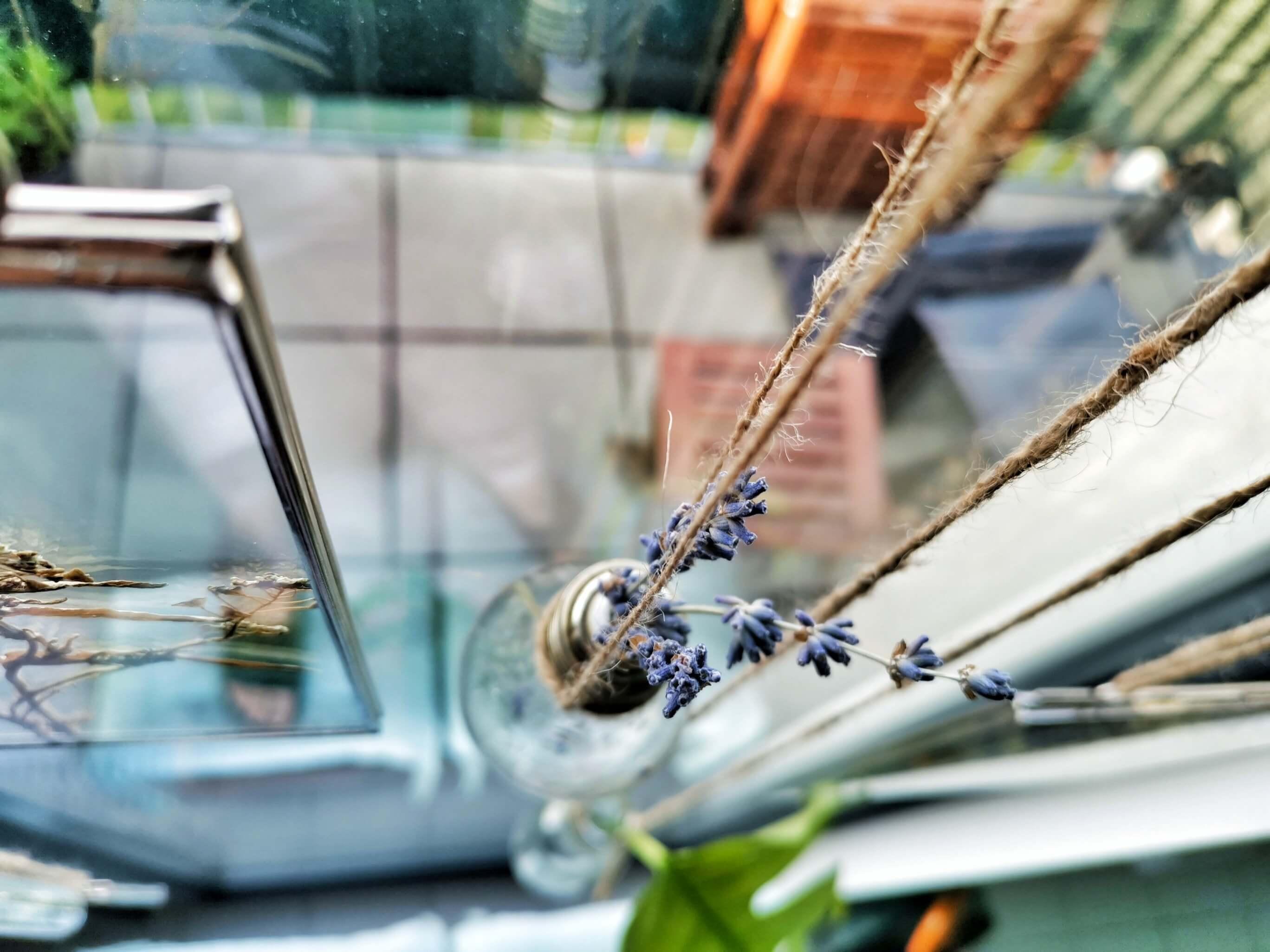 IMG 20190501 185656 01 resized 20190513 100701559 1 - Botanický windowstyling: Vymeňte záclony za okenný herbár