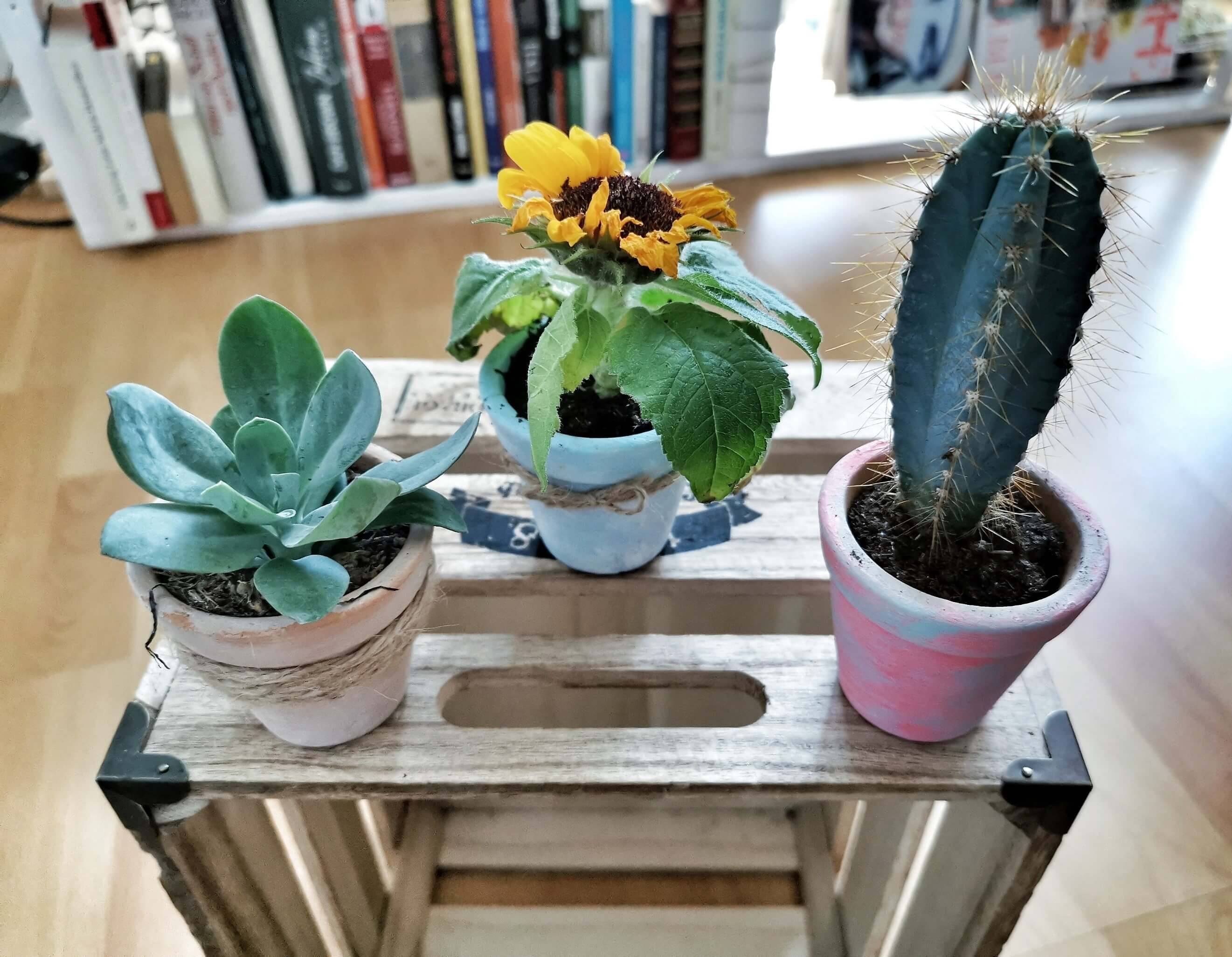 IMG 20190612 130914 01 resized 20190612 062904895 - Recyklujeme kreatívne: Kvetináče v piatich rôznych štýloch