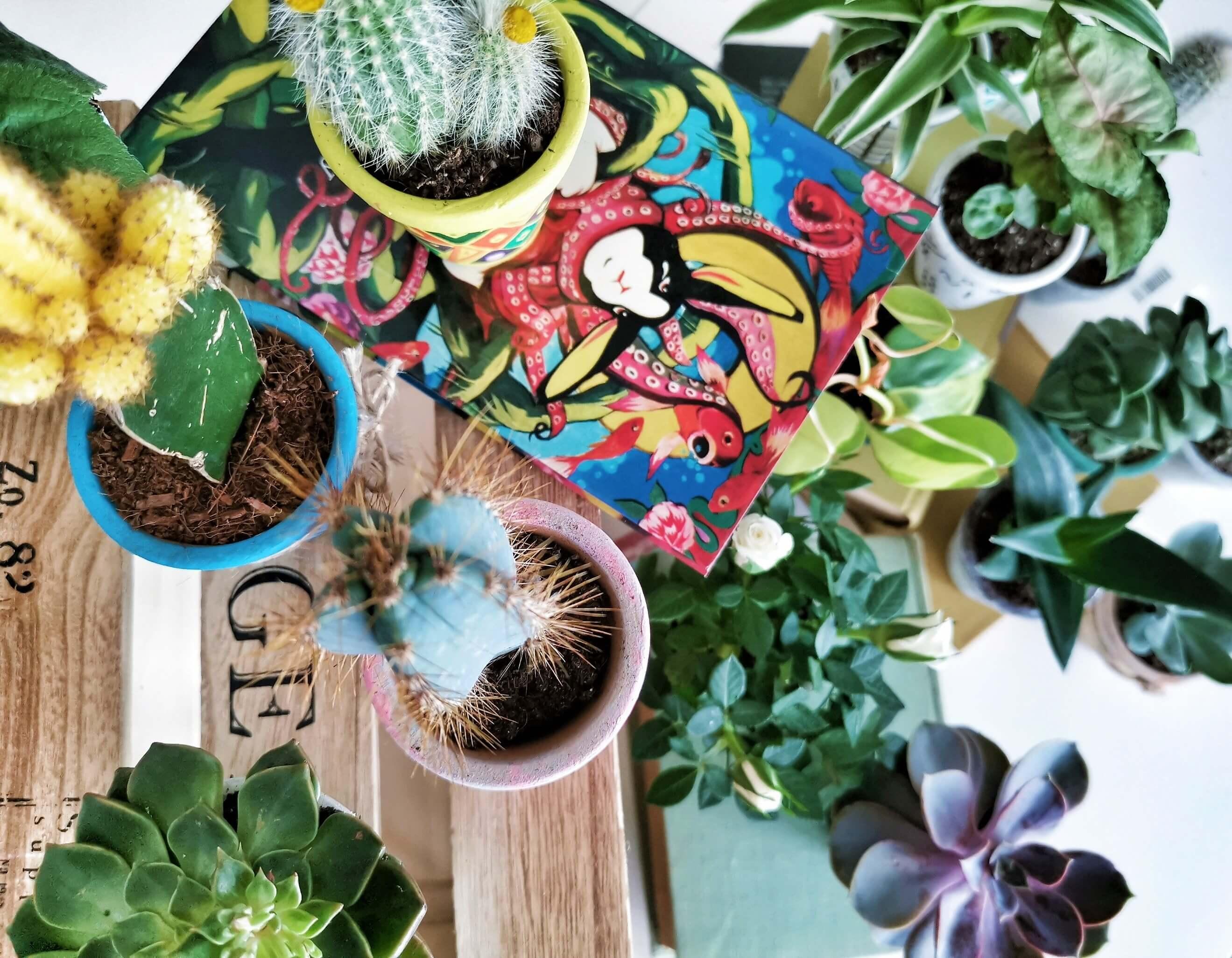 IMG 20190612 131831 01 resized 20190612 062906038 - Recyklujeme kreatívne: Kvetináče v piatich rôznych štýloch