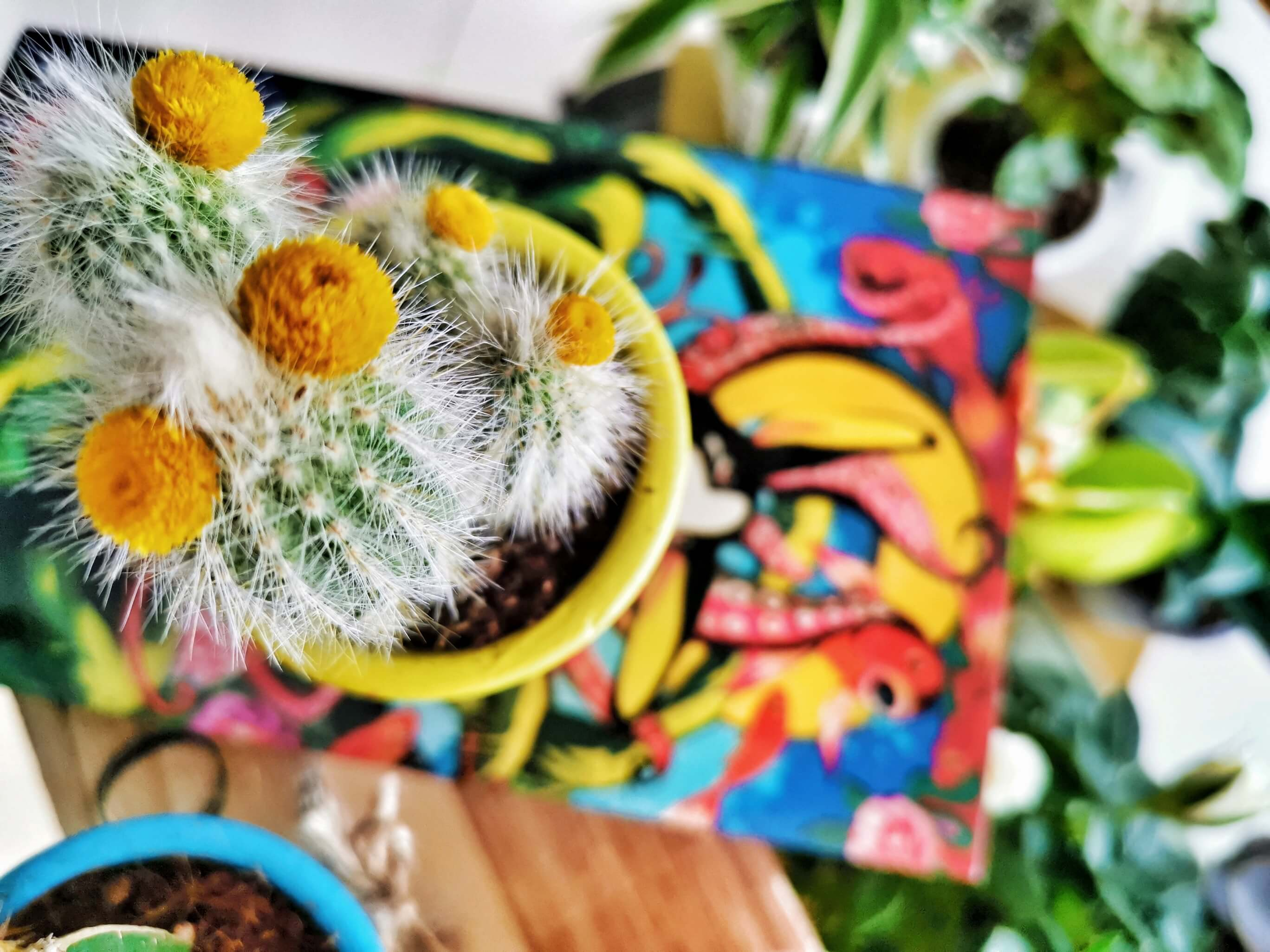 IMG 20190612 131901 01 resized 20190616 084245370 - Kreatives Recycling: Blumentöpfe in 5 verschiedenen Stilen