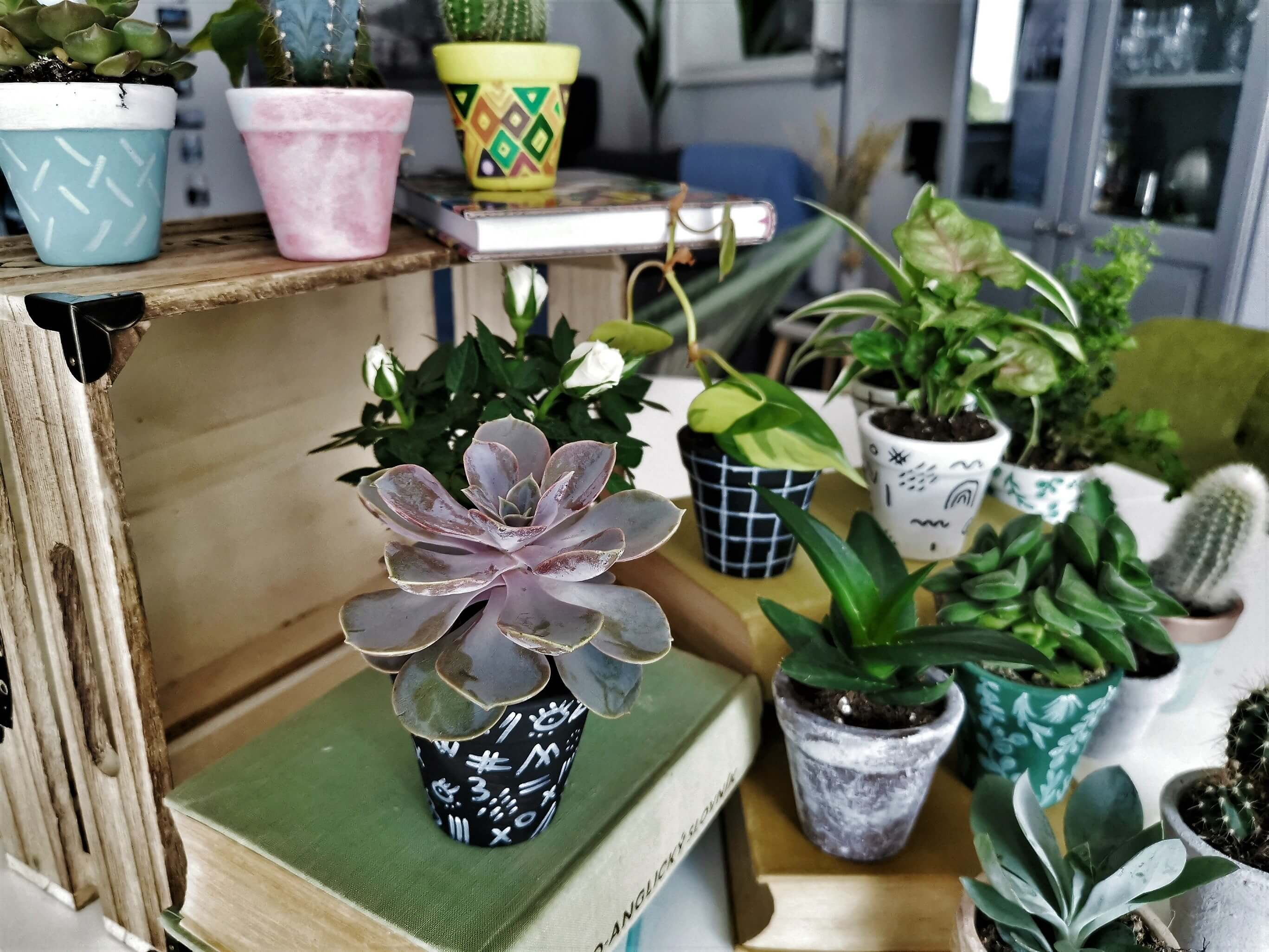 IMG 20190612 132023 02 resized 20190612 062945588 1 - Kreatives Recycling: Blumentöpfe in 5 verschiedenen Stilen