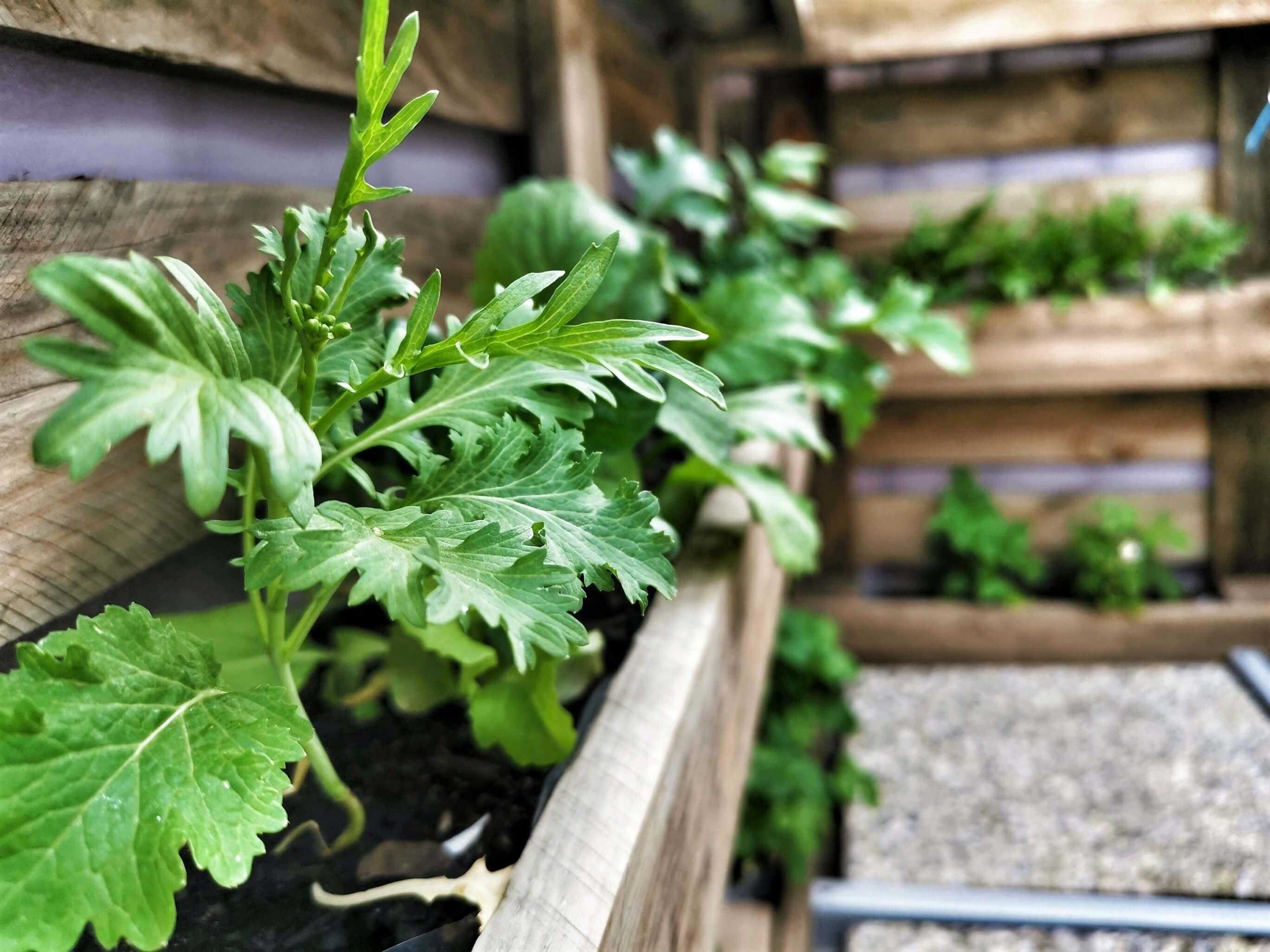 IMG 20190616 182730 02 resized 20190629 090245220 - Zaostrené na palety: Ako si vyrobiť stojan na bylinky?