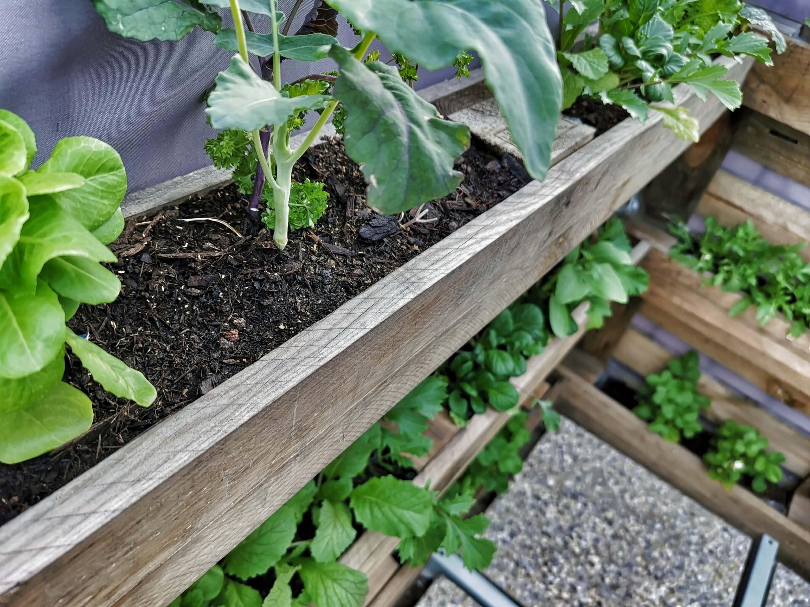 IMG 20190616 183539 02 resized 20190629 090245521 - Zaostrené na palety: Ako si vyrobiť stojan na bylinky?