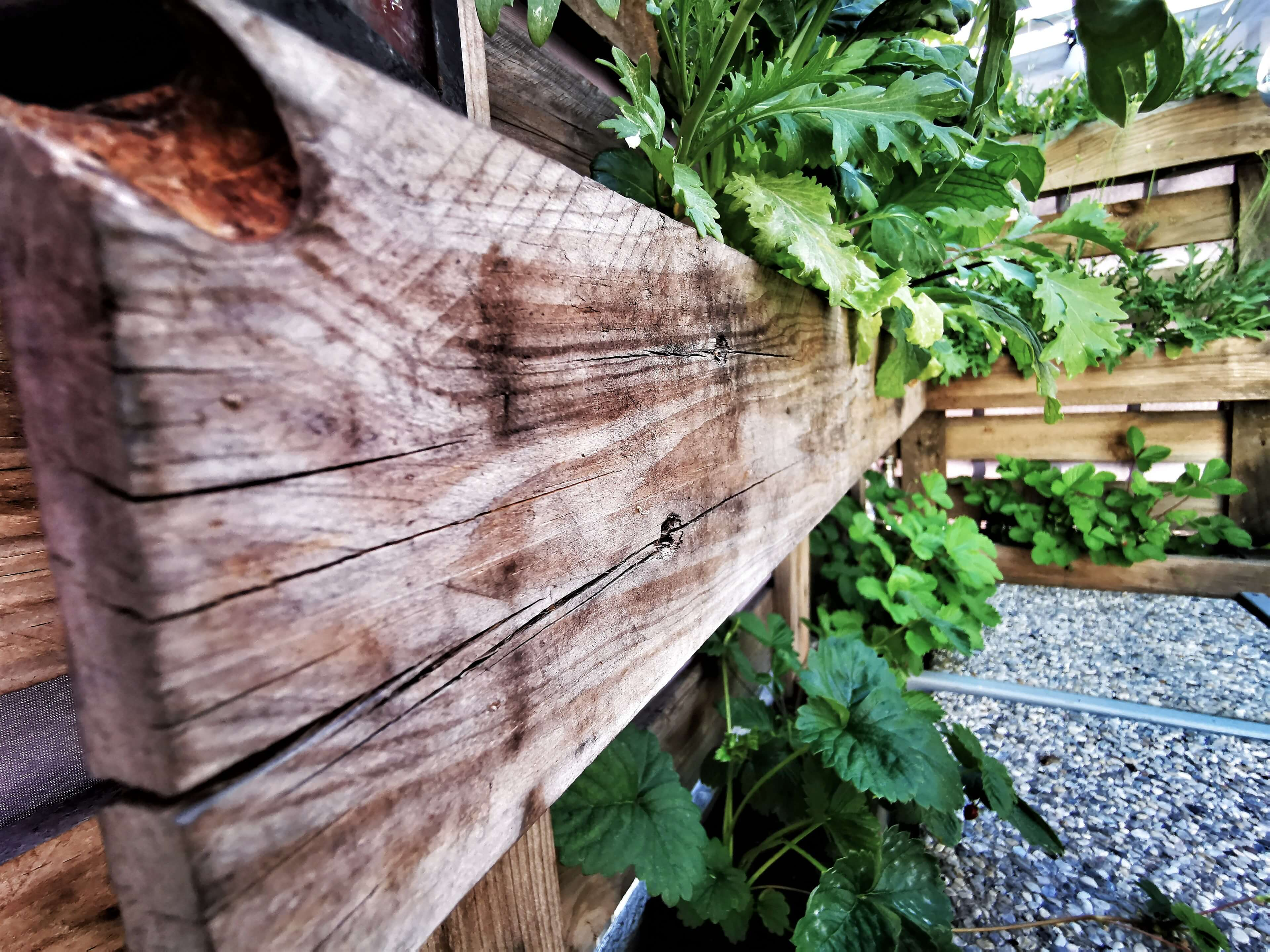 IMG 20190629 170446 01 resized 20190629 091231067 - Zaostrené na palety: Ako si vyrobiť stojan na bylinky?