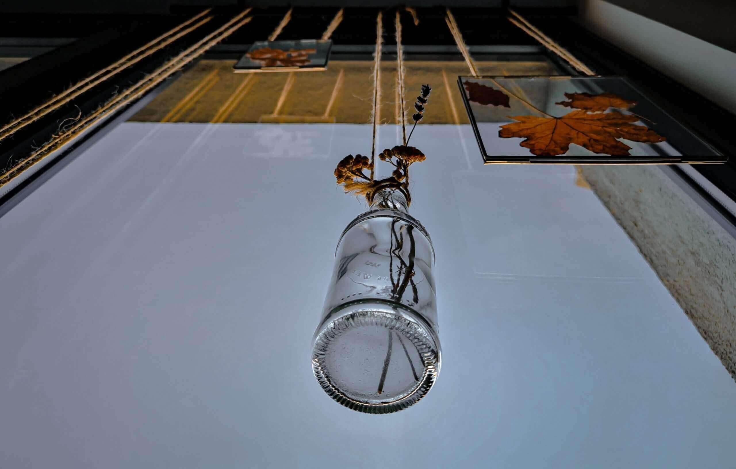 IMG 20200208 154009 1 scaled e1591346271989 - Botanický windowstyling: Vymeňte záclony za okenný herbár