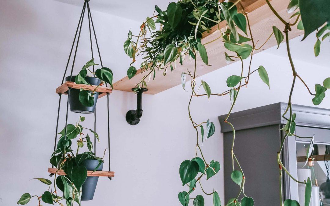 Tip pre botanikov: závesný stojan na rastliny v 4 krokoch