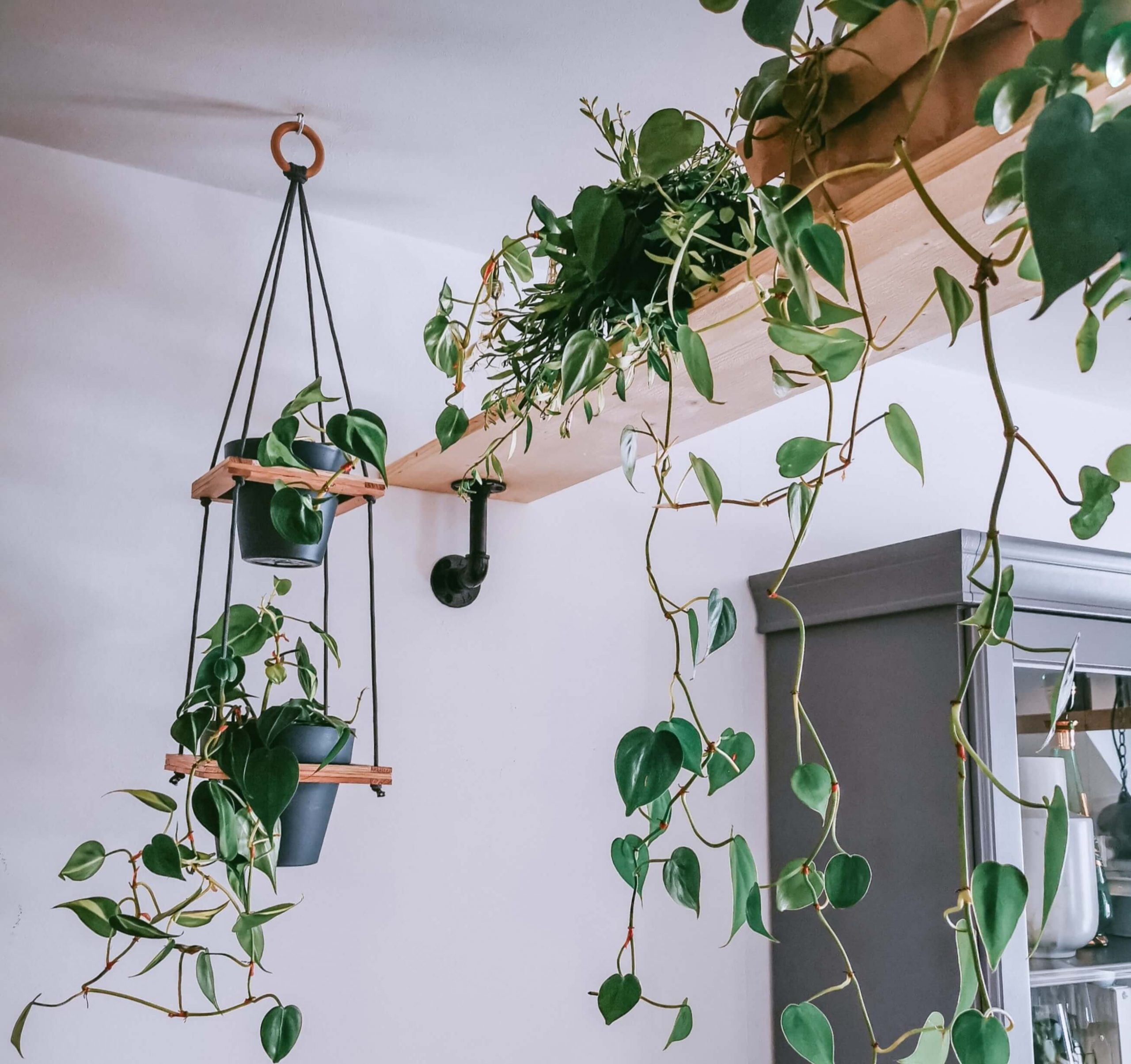 0 IMG 20200923 154443 1 scaled - Ein Tipp für alle Botaniker: DIY Hängeampel