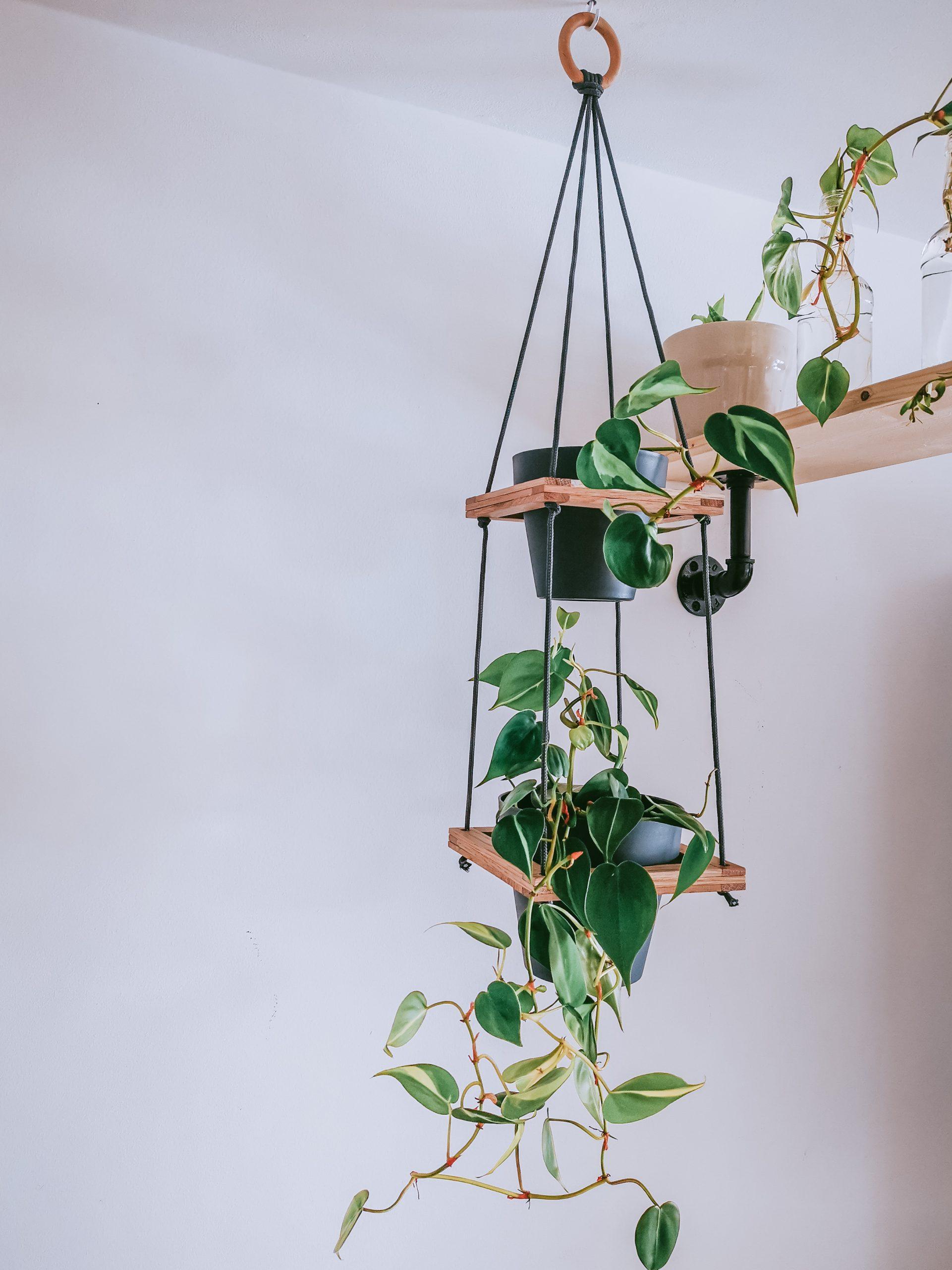 IMG 20200919 120542 1 scaled - Tip pre botanikov: závesný stojan na rastliny v 4 krokoch