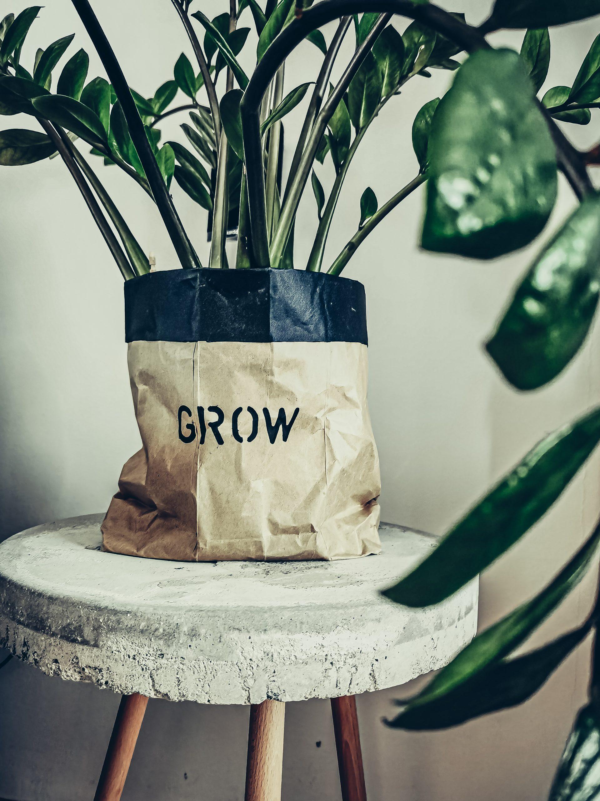 IMG 20210515 093446 scaled - TOP TIP: Nepremokavý kvetináč z papierovej tašky