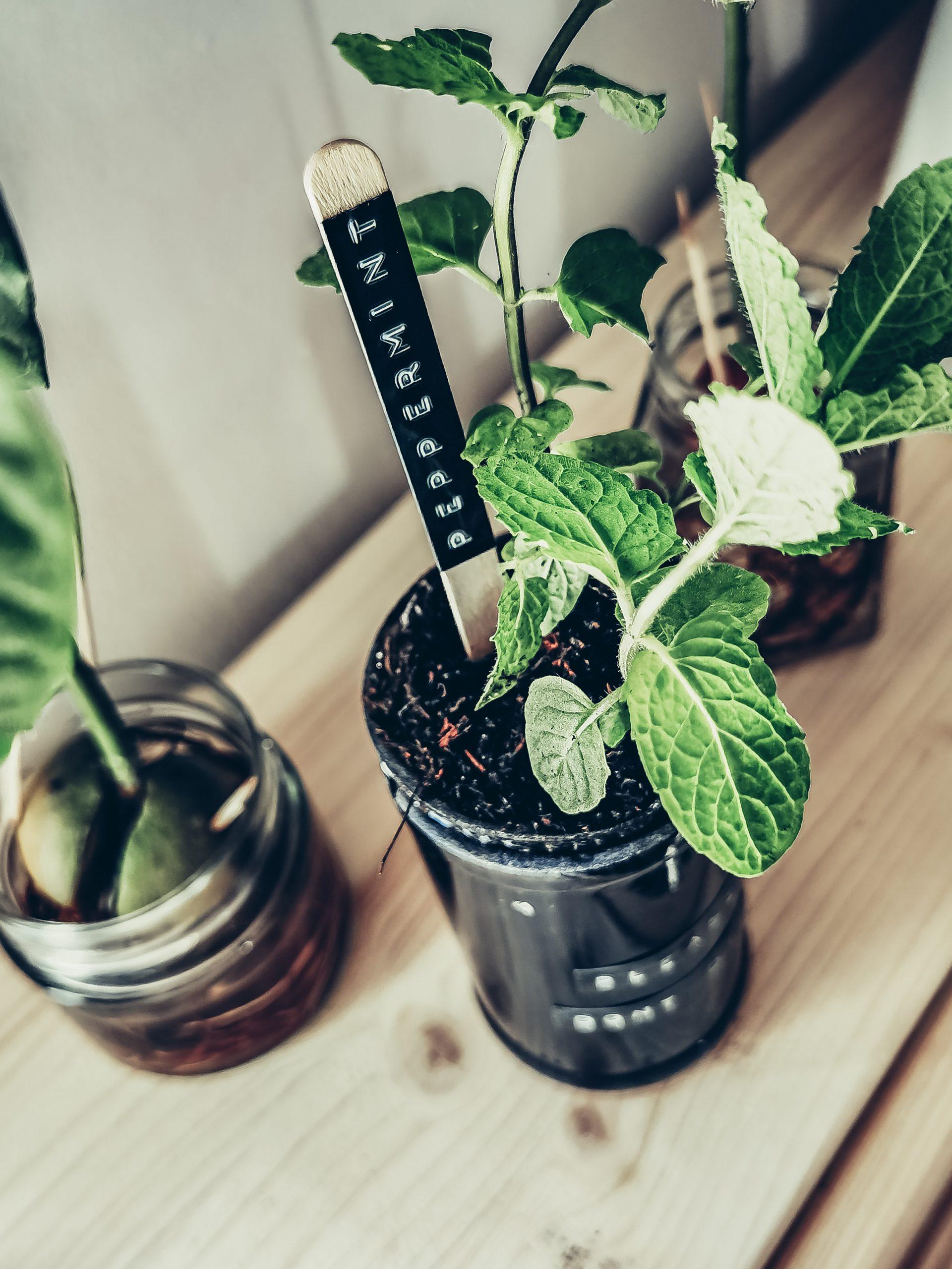 IMG 20210515 135116 scaled - Ako si vyrobiť samozavlažovací kvetináč z fľaše