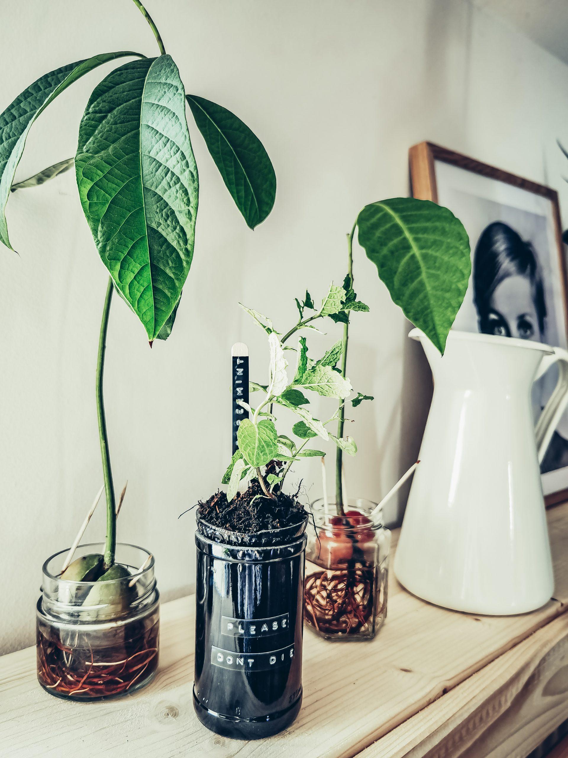 IMG 20210515 135147 scaled - Ako si vyrobiť samozavlažovací kvetináč z fľaše
