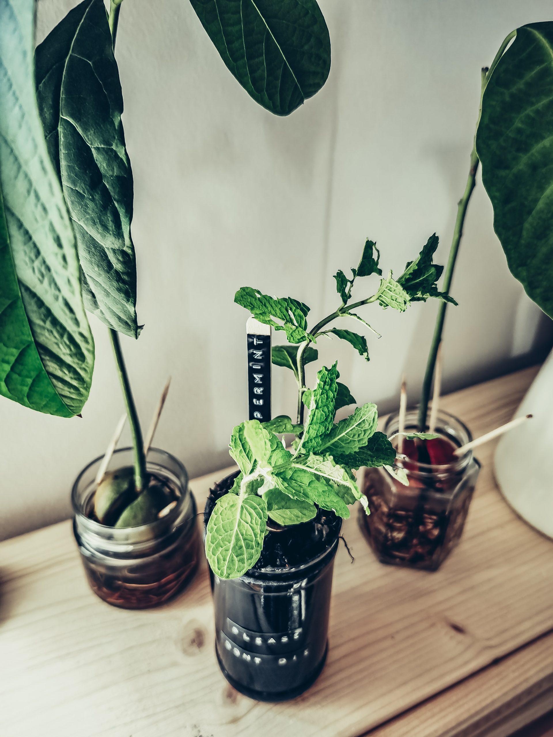 IMG 20210515 135200 scaled - Selbstbewässernder Blumentopf aus leeren Flaschen